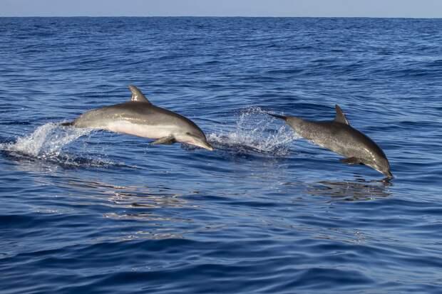 На Фарерских островах состоялась традиционная охота на дельфинов, и это страшно