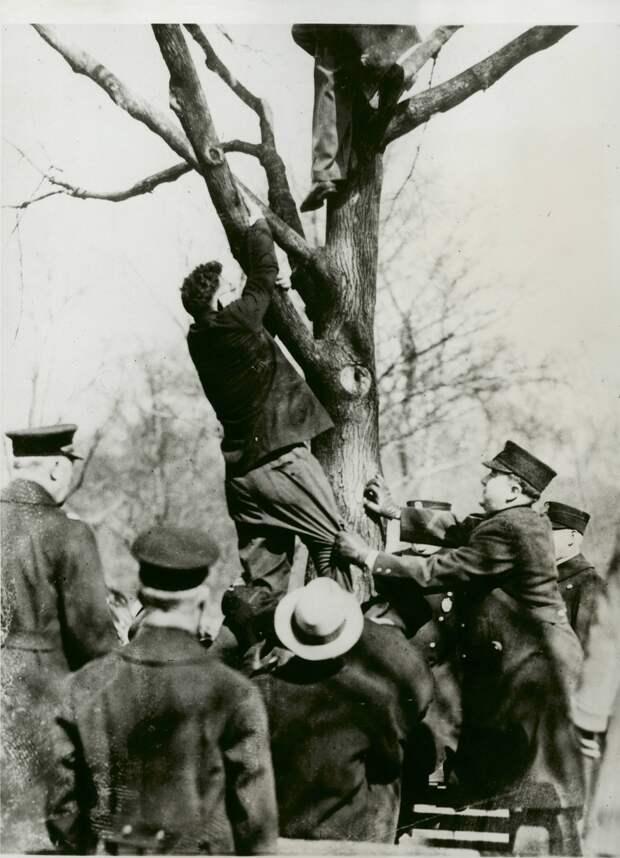 1931. Коммуниста Бенджамина Саула снимает с дерева бостонская полиция