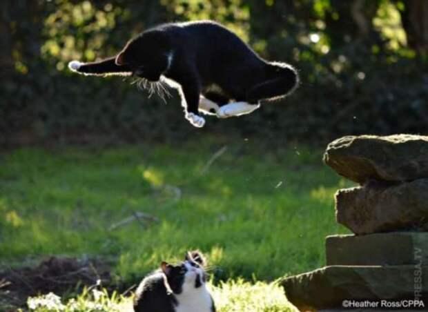 Забавные фотографии животных с конкурса Comedy Pet Photo Awards 2020