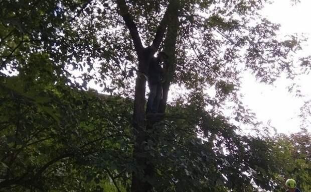 Житель Москвы застрял на дереве в Крыму, спасая котёнка