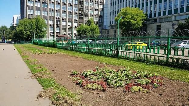 В 1-м Стрелецком проезде высадили тысячу цветов