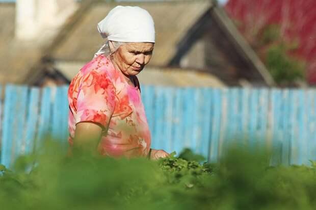 Массаж рассады и порка деревьев: бабушкины методы, одобренные наукой