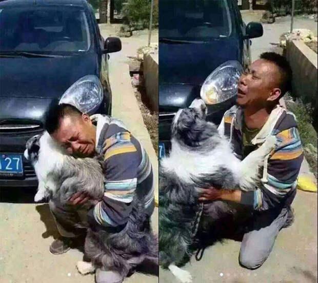 Встреча человека и его собаки, которая была украдена