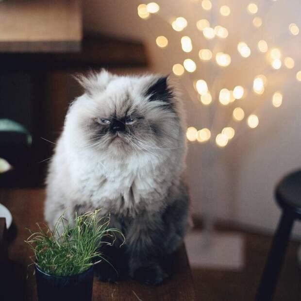 Не подумайте, Нон живёт в очень хороших условиях — его постоянно кормят, и у него есть друзья животные, кот, милота, мимика, морда, ненависть