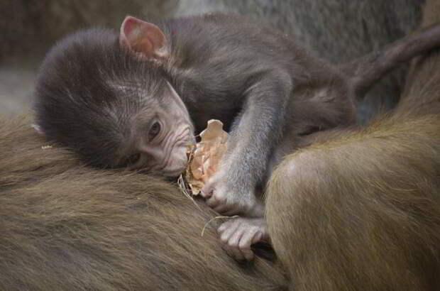Подборка снимков детенышей животных, которые растопят сердце каждого!