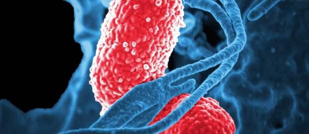 Будет ли в мире суперинфекция суперэпидемия?