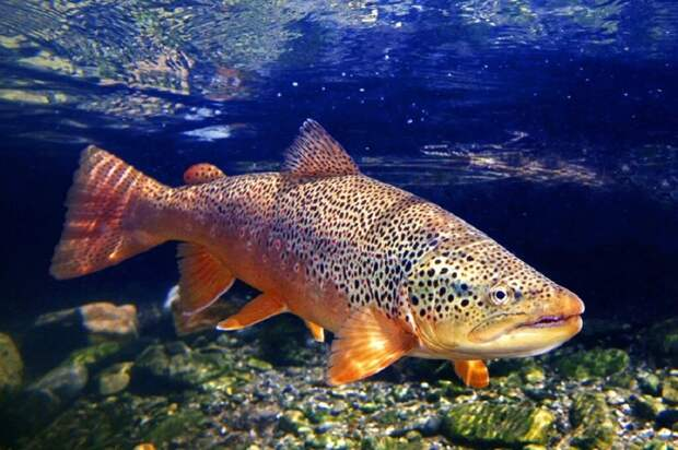 Ученые обнаружили следы запрещенных наркотиков в мозге речных рыб