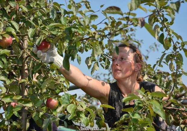 Урожай. Фото: из открытых источников