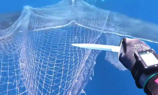 Кит приплыл к людям и потянул за собой вниз: другой кит нуждался в помощи