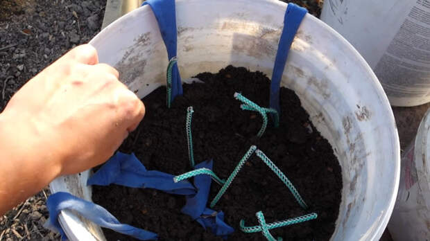 Супер-идея для занятых огородников: огурцы на воде