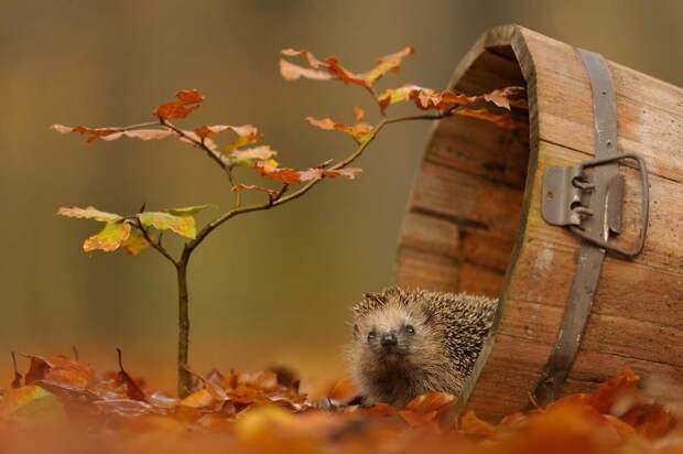Животные и осень