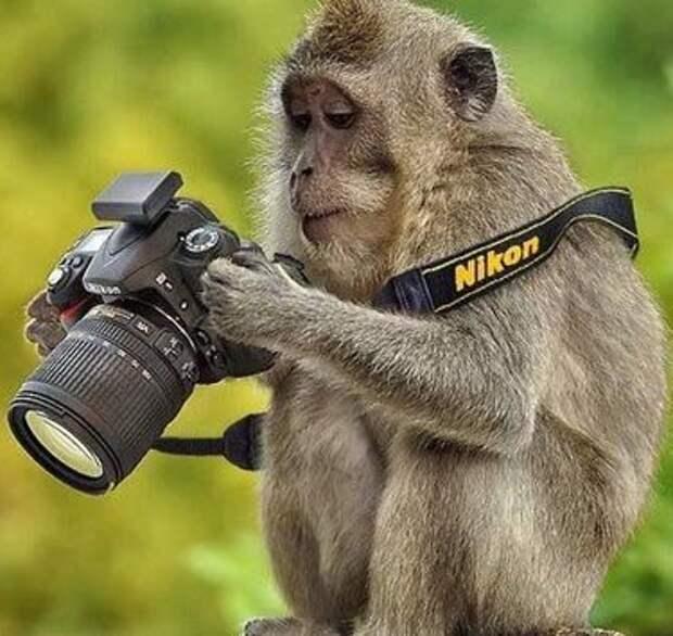 Фотограф выиграл суд у обезьяны