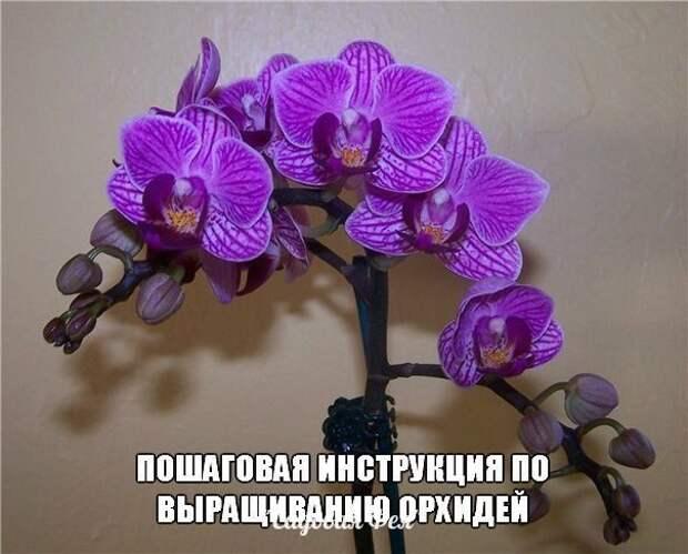 Пошаговая инструкция по выращиванию орхидей