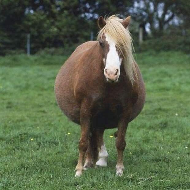 25 фото на случай, если вы не знали как мило выглядят беременные животные (25 фото)