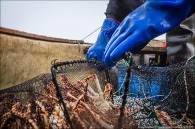Порт с годовым оборотом в миллион тонн рыбы и морепродуктов построят на Сахалине
