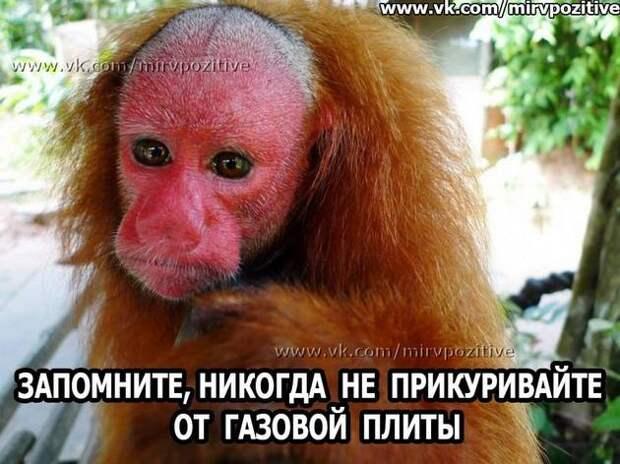 Девочка спрашивает у мамы: - А правда, что все люди произошли от обезьян?...