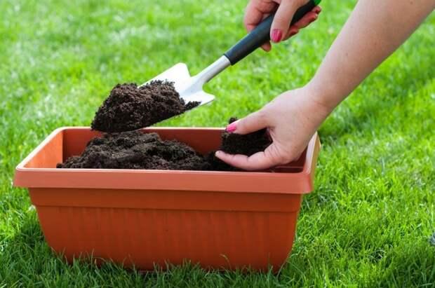 Как улучшить почву без компоста