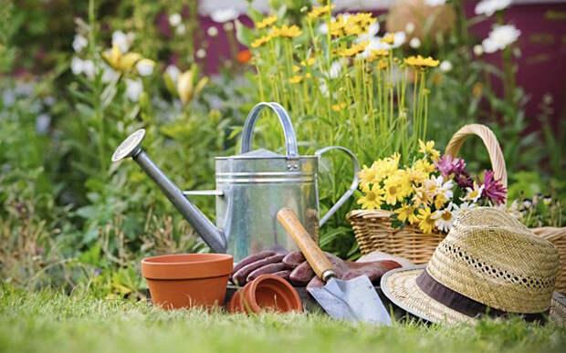 Гениальные советы для начинающих и опытных садоводов