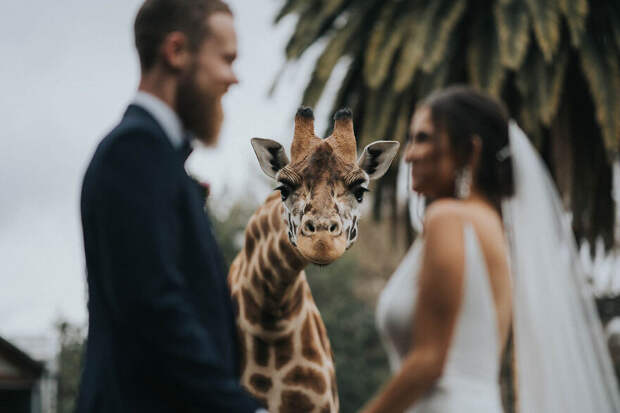 15 лучших свадебных фотографий 2020 года сконкурса Junebug Weddings