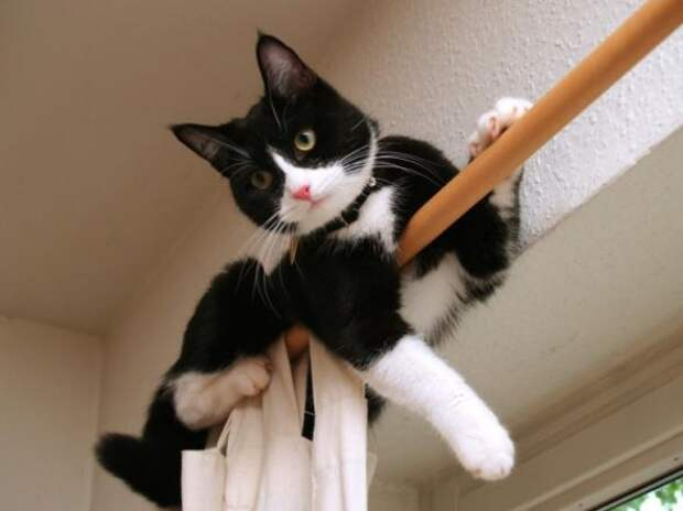 Прикольные кошки фото