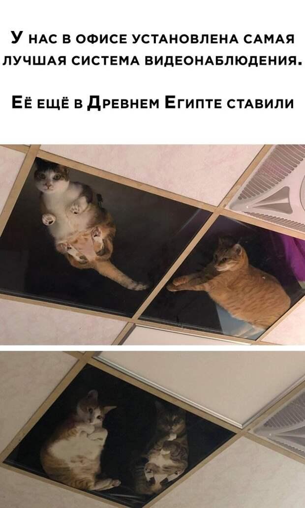 Коты ходят по потолку