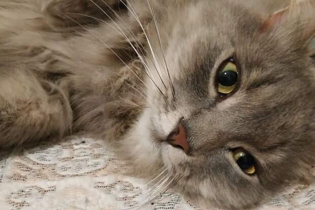 Кот Пряник спас беременную хозяйку от диабетической комы