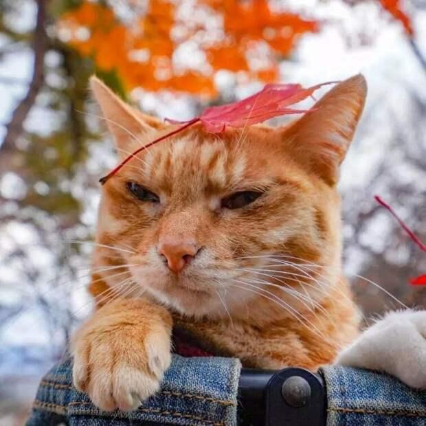 Однако два спасённых котейки Дайкичи и Фуку-чан обожают дальние прогулки. Они вместе со своим любящим хозяином посетили уже 47 префектур и более 1000 других мест в Японии в мире, домашний питомец, животные, кошки, люди, природа, путешествие