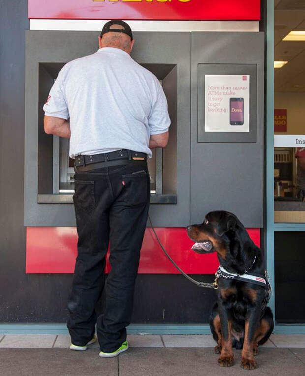 Хозяин, периметр чист! Охранники, банкомат, безопасность, деньги, друзья человека, животные, охрана, собаки