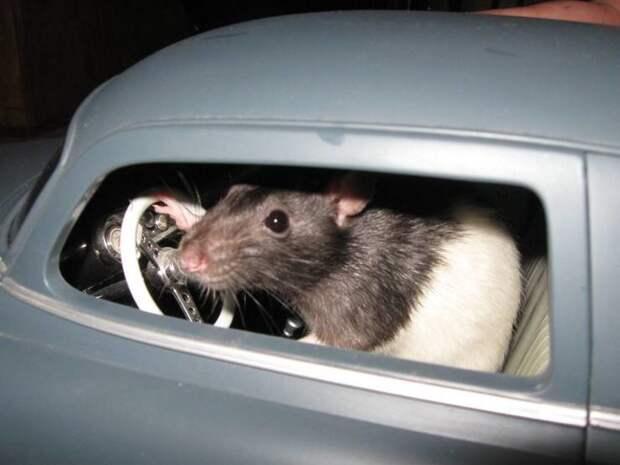 Хвостатый водитель день, животные, кадр, люди, мир, снимок, фото, фотоподборка