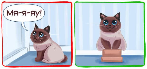 9 вредных кошачьих привычек, которые мы сами воспитываем