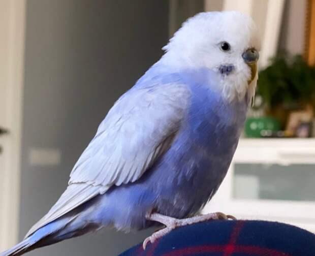 Говорящий попугай улетел из окна на улице Расплетина