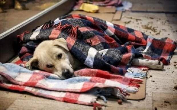 Кто знает, может, пройдет сто лет, и в наших варварских славянских странах к животным тоже будет такое отношение? Хочется верить... / Фото: zen.yandex.ru