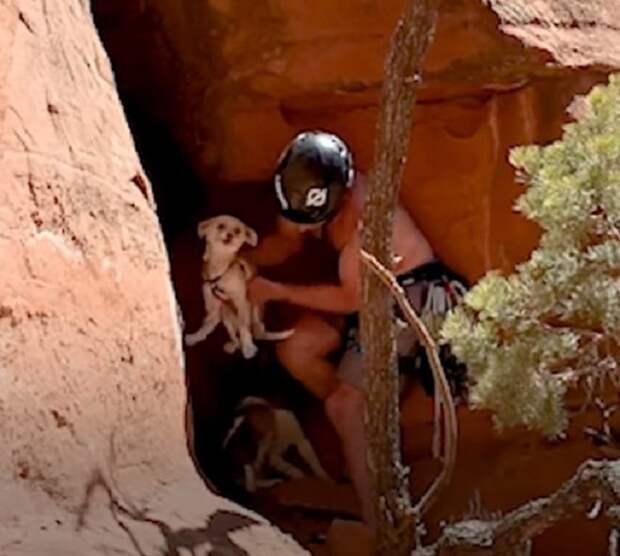 Подняв вверх голову, парень не поверил своим глазам: на скале сидела собака и испуганно смотрела вниз