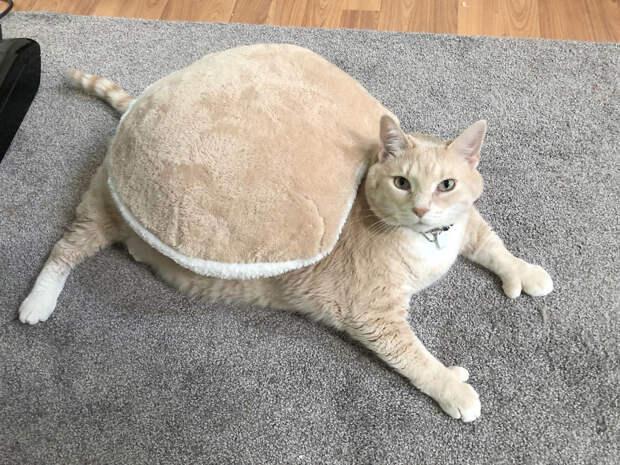 «Хочу летать!» Очень толстый кот в варежках совершает милые подвиги)