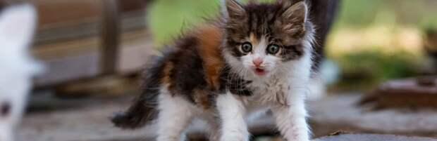 В Актау водитель спас котенка с автодороги