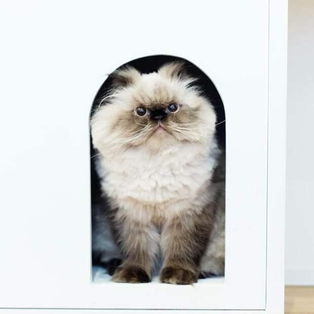 Он всегда недоволен! животные, кот, милота, мимика, морда, ненависть