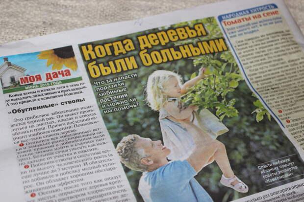 Когда деревья были больными: наша публикация в газете «Комсомольская правда»