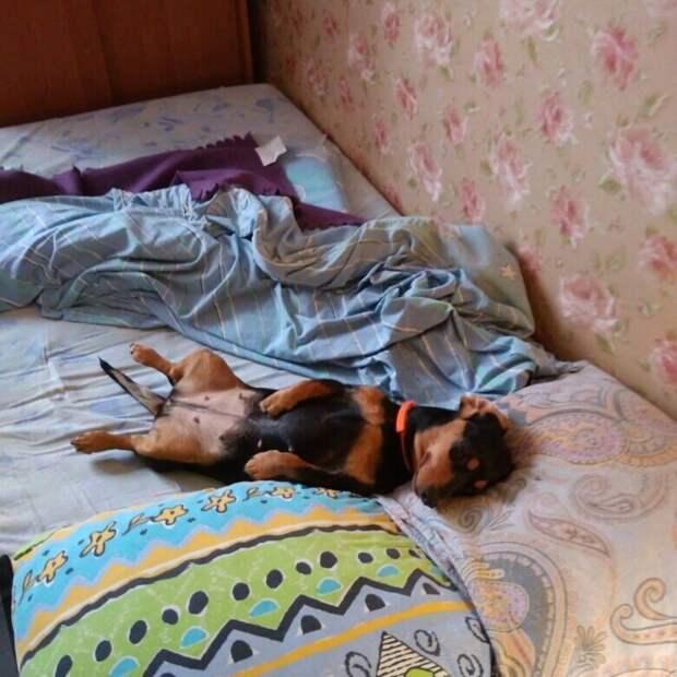 Больной истощённый пёс забрёл на дачу к людям. Семья не прогнала его, а приютила и вылечила