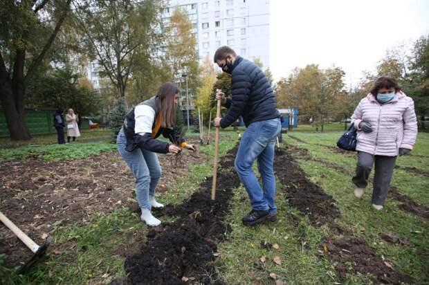 Идею акции по посадке деревьев в Лианозове  властям подсказали жители района