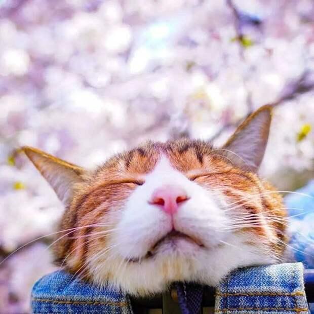 Дайкичи и Фуку-Чан - кошки, которые путешествуют вместе со своим хозяином в мире, домашний питомец, животные, кошки, люди, природа, путешествие