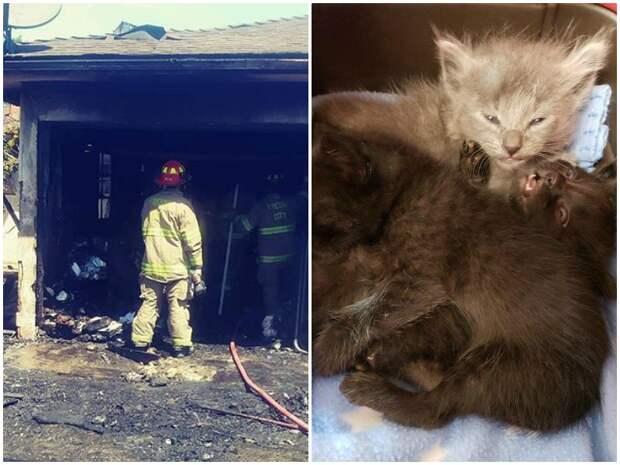 Под обломками сгоревшего дома пищали перепуганные котята история, история спасения, коты, котята, кошки, помощь животным, спасение животных