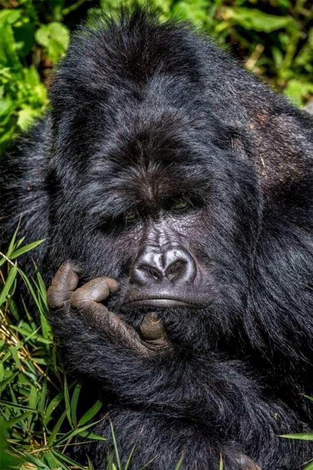 Лучшие забавные фотографии животных 2020