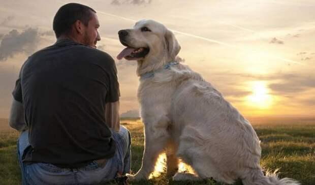 Image result for Собаки способны отличить настоящий язык от тарабарщины