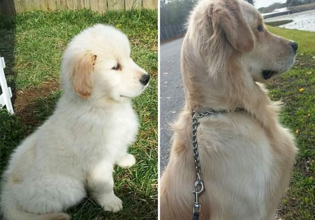 Разница в фото 2 года.