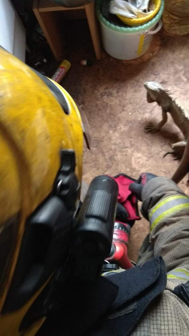 Из горящей квартиры на Планерной пожарные спасли игуану