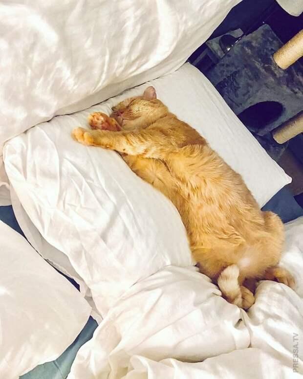 Спасение мистера Брюса Уиллиса - самого грустного кота