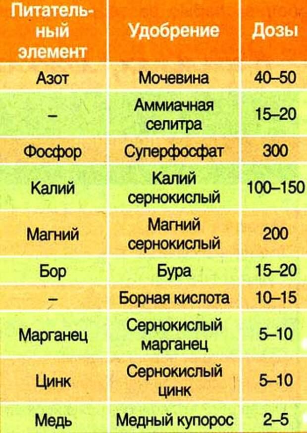 sadov_n_15_2.jpg