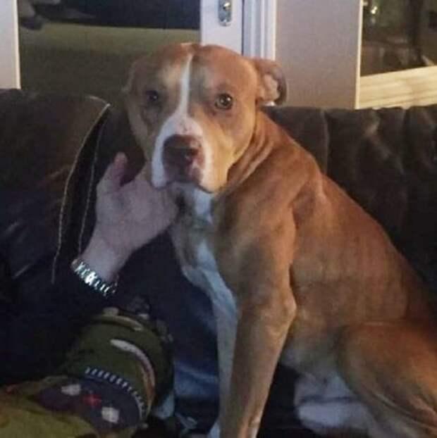 Собака лежала на земле, прижимаясь к старому креслу – так она пыталась согреться в зимнюю стужу