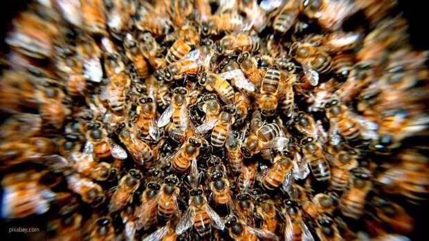 Пчелы напали и покусали виновников ДТП в Приморье