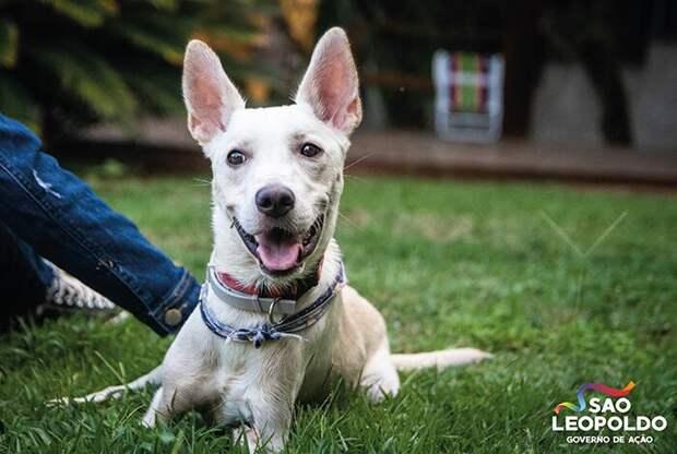 Хозяйка бросила свою собаку с особенностями, но её спасли и подарили дом